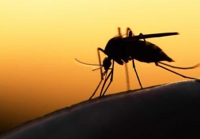 Klimawandel: Malaria-Mücken breiten sich weiter in Europa aus