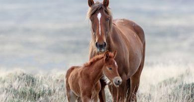 ASPCA Stellt Wild Horse und Burro Vorschlag im US-Senat Anhörung