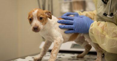 Was ist zu Erwarten, dass im Notfall der Tierarzt Nach einer Toxin-Belastung