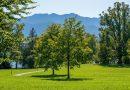 Urbane Grünflächen fördern das Wohlbefinden für Menschen, die nicht in der Lage zu regulieren, die negativen Emotionen