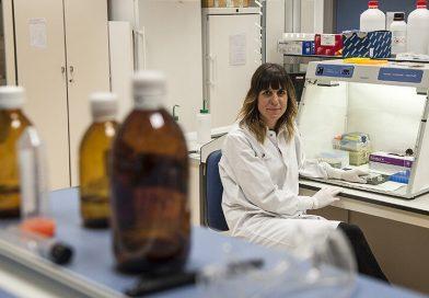 Anti-Adipositas-Wirkung von resveratrol und quercetin-Metaboliten