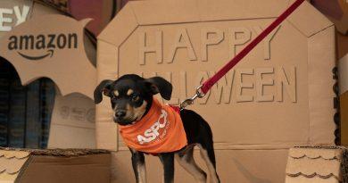 ASPCA Kooperiert mit Amazon Haustiere und Amazon Treasure-LKW für Adopt A Shelter-Dog Monat