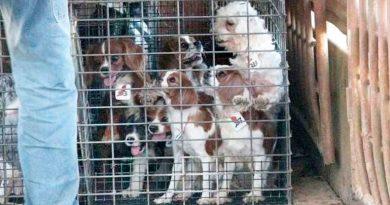 Gezwungen durch den Kongress, USDA Beginnt mit der Wiederherstellung der Datenbank des Animal Welfare Records